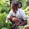 Edible Gardens: Fuel for the Body from the Soil