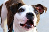 First Animal Care Center Proposed for Bronx