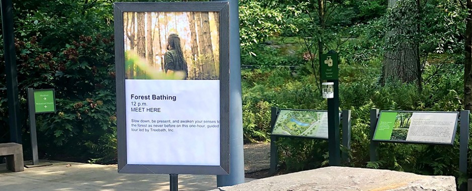 Forest Bathing to Clear Away Stress