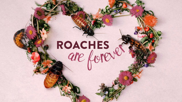 roachessm